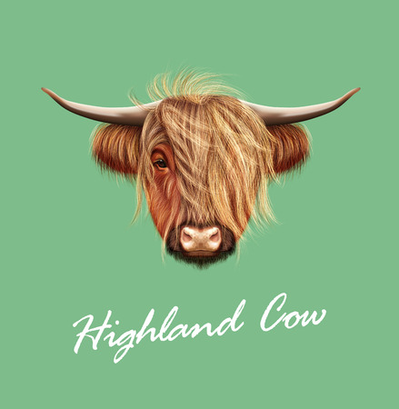 Vector Illustrated portrait of Highland cattle.