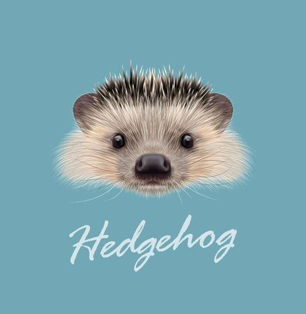 Vector Illustrated portrait of Hedgehog