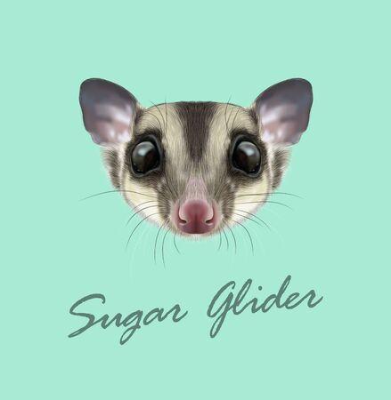 Vector Illustrated portrait of Sugar glider