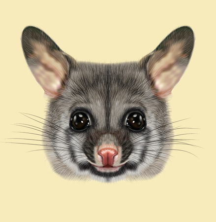 Illustrated portrait of Common brushtail possum Stock Photo