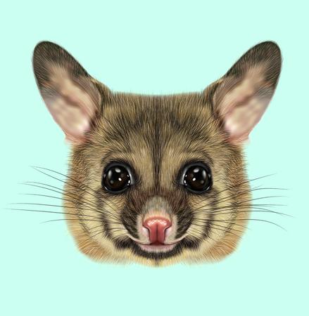 possum: Illustrated portrait of Common brushtail possum Stock Photo