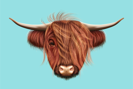 ox eye: Illustrated portrait of Highland cattle Stock Photo