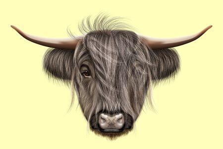 Illustrated portrait of Highland cattle Banque d'images