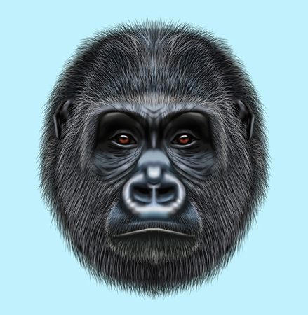 Illustrated portrait of Gorilla male. Cute head of wild ape on blue background.