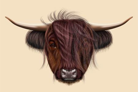 ハイランド牛のイラスト付きの肖像画。ベージュ色の背景でスコットランドの牛のかわいいヘッド。