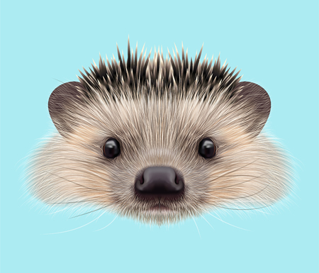 nocturnal animal: Illustrated portrait of Hedgehog. Cute head of wild spiny mammal on blue background.