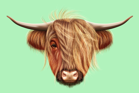 Illustrated portrait of Highland cattle. Cute head of Scottish cattle on light green background. Banco de Imagens