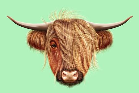 Retrato ilustrado de ganado Highland. Cabeza linda del ganado escocés en fondo verde claro.