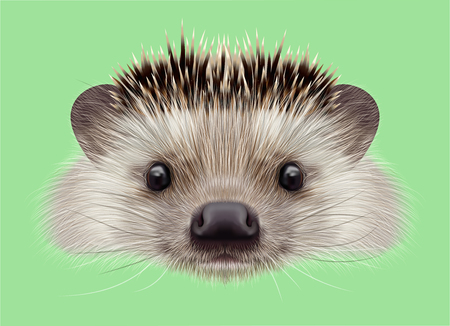 night vision: Illustrated portrait of Hedgehog. Cute head of wild spiny mammal on green background.