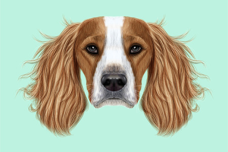 Illustrated Portrait of English Springer Spaniel dog. Cute face of domestic breed dog on blue background. Stock Photo
