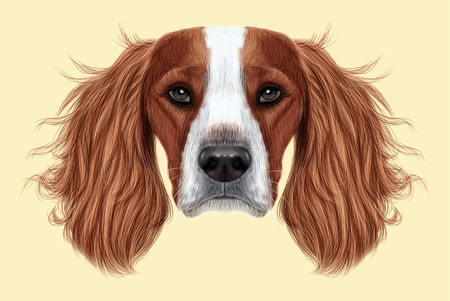 Illustrated Portrait of English Springer Spaniel dog. Cute face of domestic breed dog on beige background. Stock Photo