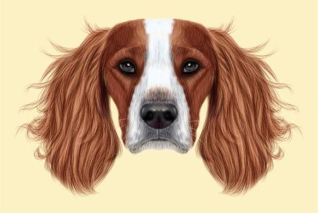 Portrait illustré du chien anglais Springer Spaniel. Joli visage de chien de race domestique sur fond beige. Banque d'images - 73110557