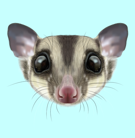 Illustrated portrait of Sugar glider. Cute head of wild Australian mammal on blue background.