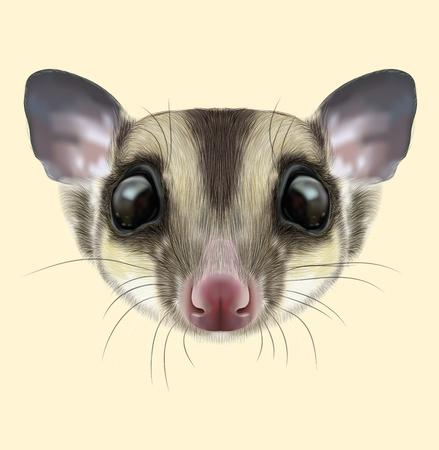Illustrated portrait of Sugar glider. Cute head of wild Australian mammal on tan background.