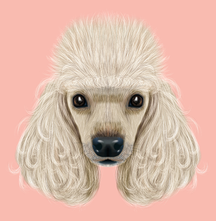 Geïllustreerde portret van poedel hond. Leuk gezicht van binnenlandse rassenhond op roze achtergrond.