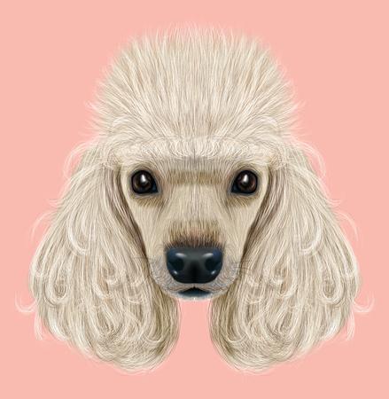 Illustriertes Porträt des Pudelhundes. Nettes Gesicht des inländischen Zuchthundes auf rosa Hintergrund. Standard-Bild - 73112056