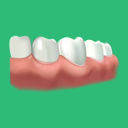 premolar: Human chewing surface and tooth. Vector illustration of realistic chewing surface of teeth on green background.