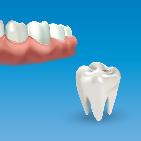 premolar: Human chewing surface and tooth. Vector illustration of realistic chewing surface of teeth on blue background. Illustration