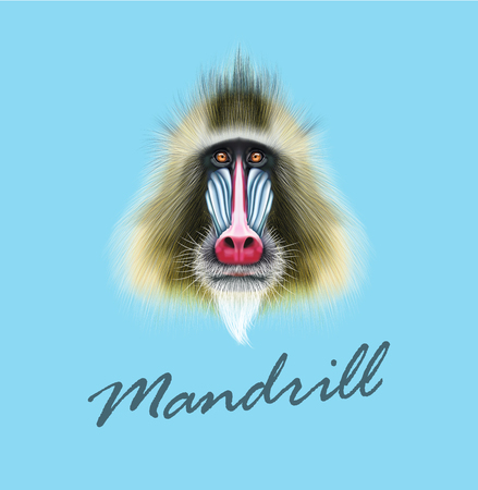 A Vector Illustrated portrait of Mandrill monkey. Cute fluffy face of primate on blue background.