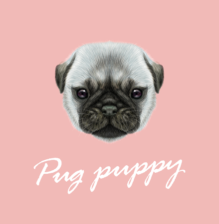 A Vector Illustrated portrait of Pug puppy. Cute fluffy silver face of domestic dog on pink background. Ilustração