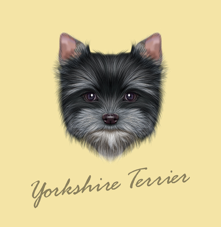 Illustrated portrait of Yorkshire Terrier puppy. Cute fluffy grey face of domestic dog on tan background. Illustration