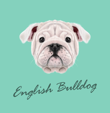 Illustrated portrait of English Bulldog puppy. Cute fluffy white face of domestic dog on blue background.