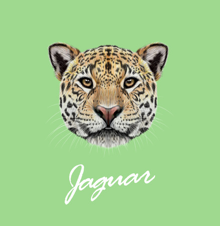 Vector Illustrated portrait of Jaguar. Cute fluffy face of Big cat with yellow eyes on green background.