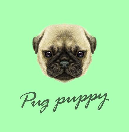 Illustriertes Porträt des Pugwelpen. Nettes flaumiges Kitzgesicht des inländischen Hundes auf grünem Hintergrund. Standard-Bild - 75739030