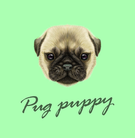 Illustrated portrait of Pug puppy. Cute fluffy fawn face of domestic dog on green background. Illustration