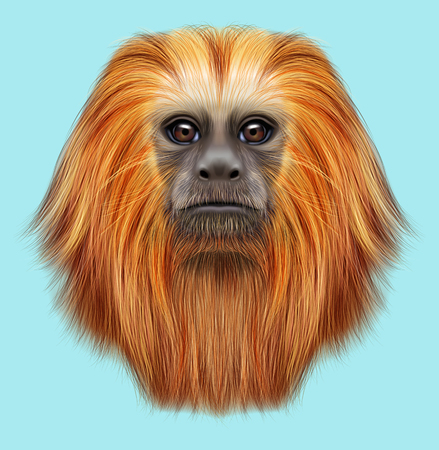 Illustrated portrait of Golden lion tamarin monkey. Cute fluffy face of primate on blue background. Stock Photo