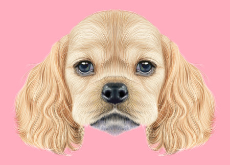 Illustrated portrait of American Cocker Spaniel puppy. Cute fluffy golden face of domestic dog on pink background. Stock Photo