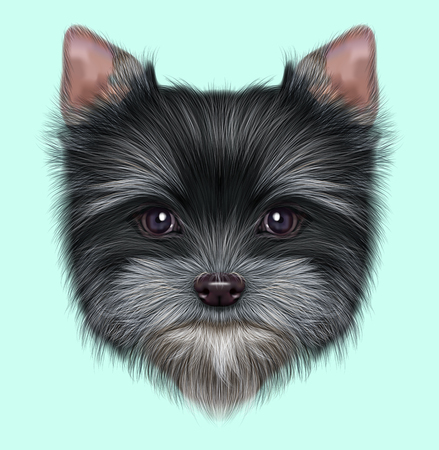 Illustrated portrait of Yorkshire Terrier puppy. Cute fluffy grey face of domestic dog on blue background. Stock Photo