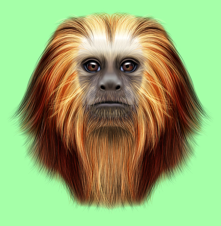 Illustrated portrait of Golden-headed lion tamarin monkey. Cute fluffy face of primate on green background.