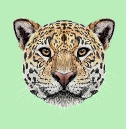 재규어의 삽화가 초상화. 귀여운 솜 털 얼굴 녹색 배경에 노란색 눈을 가진 큰 고양이입니다. 스톡 콘텐츠