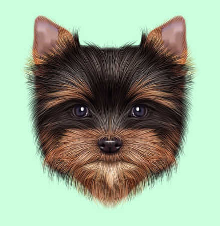 Illustrated portrait of Yorkshire Terrier puppy. Cute fluffy pale cream face of domestic dog on green background. Stock Photo