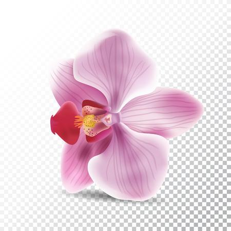 Vector realistic illustration of orchid pink flower. Illustration
