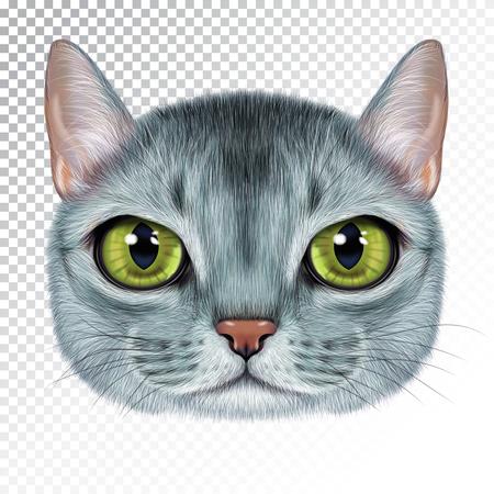 Abyssinian cat vector illustration portrait.