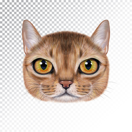 Portrait of Abyssinian cat vector illustration. Cute realistic cartoon face of sable color cat for print on pillow. Illustration