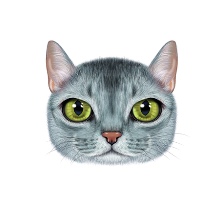 Illustration portrait of Abyssinian cat. Banco de Imagens