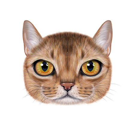 Illustration portrait of Abyssinian cat. Stock Photo