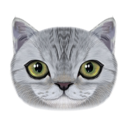 Illustration portrait of domestic cat.