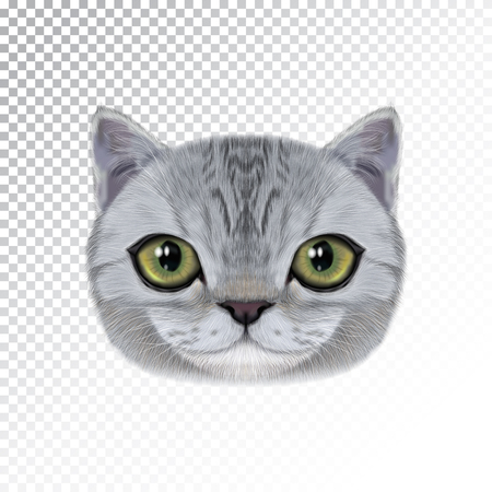 Vector illustration portrait of domestic cat.