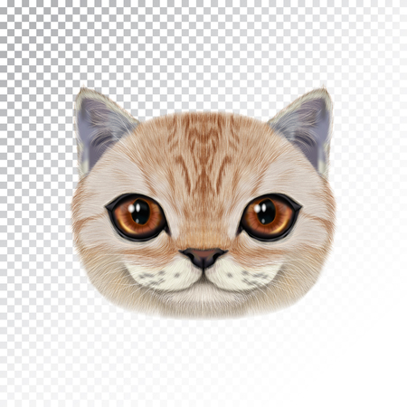 Vector illustration portrait of domestic cat. Cute realistic face of caramel color cat for print on pillow. Ilustração