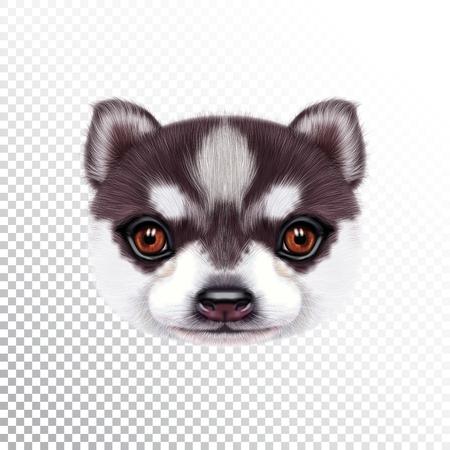 ハスキー子犬のベクトルイラストの肖像画。枕にプリントのためのバイカラーの家畜犬のかわいい頭。