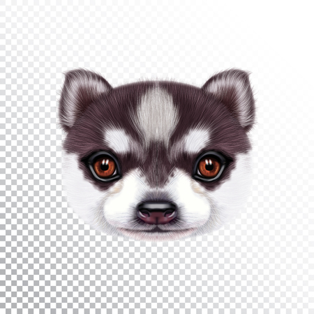 Vector Illustrated portrait of Husky Puppy. Cute head of a bicolor domestic dog for print on pillow.