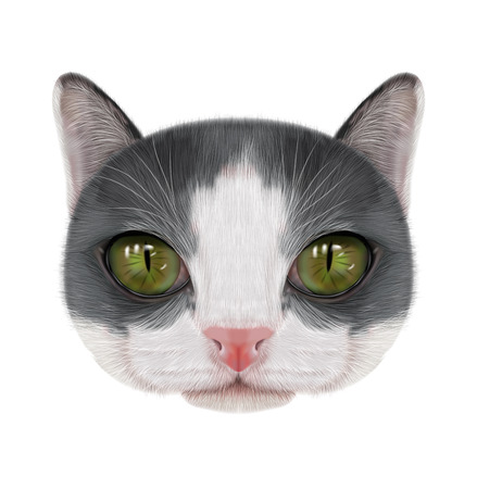 Illustration portrait of domestic cat.