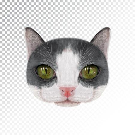 Domestic cat vector illustration portrait.