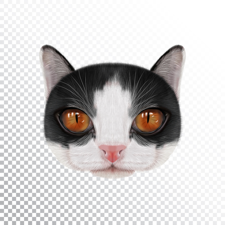 Vector illustration portrait of domestic cat. Cute realistic face of bicolor cat for print on pillow.