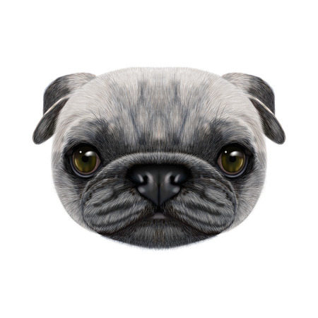 Illustrated face of Pug Dog. Stock Photo