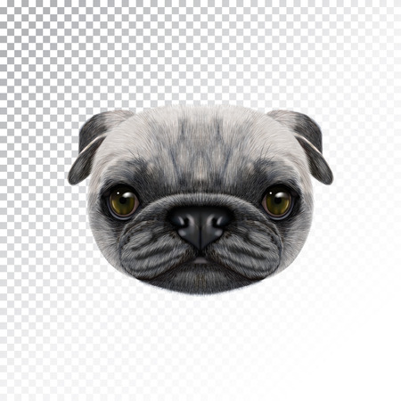Vector Illustrated face of Pug Dog.